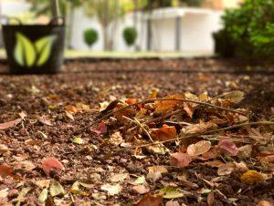 Ciencia por qu los rboles pierden las hojas for Como se llaman los arboles que no pierden sus hojas